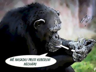 opice, Kubera